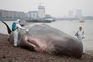 A Sculpture by Captain Boomer Simulates a Beached Whale