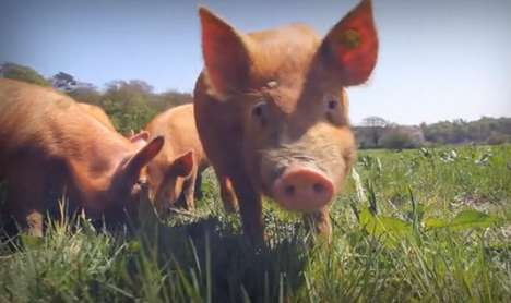 Interactive Piglet Play Posters - The World's First Really Live Feed Teaches Compassionate Farming