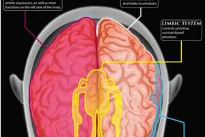 This Infographic Explains How the Brain Works in More Detail