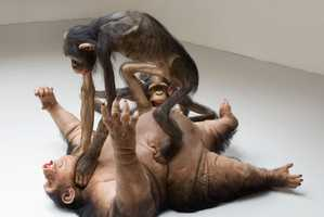 The 'Old Enemy, New Victim' Sculpture Has Monkeys Engaged in Combat
