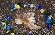 Roadkill Memorial Photography
