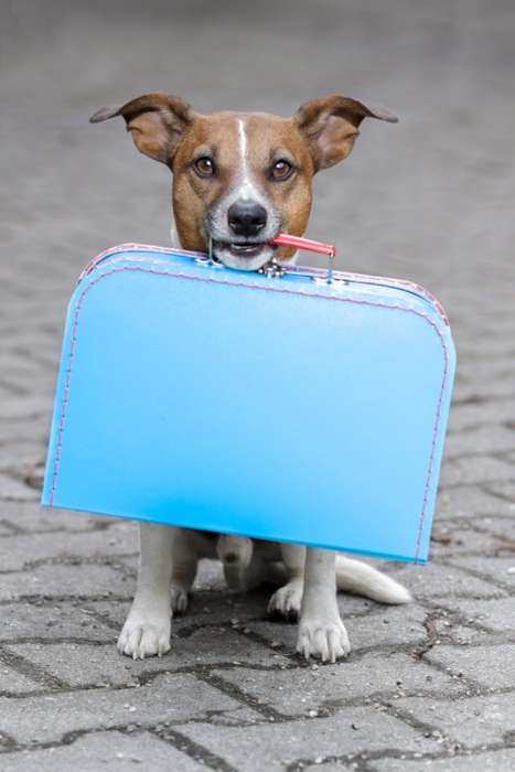 Traveling Pooch Promotions - Virgin Australia's Loyalty Program Encourages Traveling with Pets