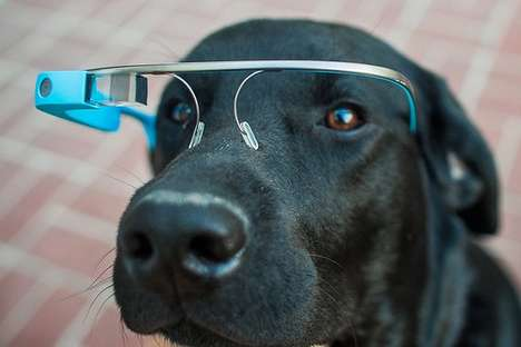 Tech-Infused Pet Glasses - Google Glass for Dogs Hopes to Improve Communication in Crises