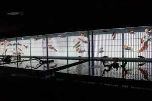 This Aquarium Art Elevates Tanks into Exhibit-Worthy Pieces