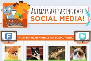 This Graphic Explains Why Animals on the Internet are Loved