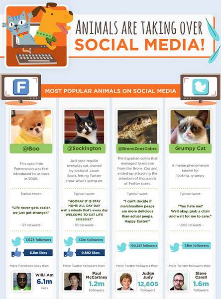 Internet Pet Popularity Infographics - This Graphic Explains Why Animals on the Internet are Loved