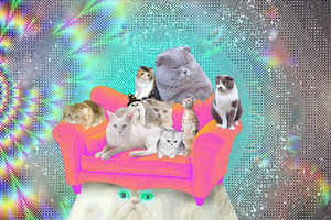 These Psychedelic Cats are Flashy and Adorable