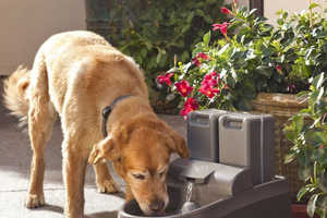 The Drinkwell Outdoor Dog Fountain is Perfect for Hot Summer Days