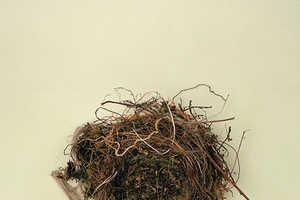 Photogrpher Bianca Tuckwell Takes Intimate Bird's Nest Photos