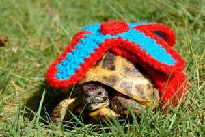 These Knitted Sweaters are Made with Pet Turtles in Mind