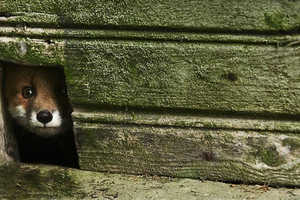 Kai Fagerstrom Photographs Abandoned Animals in Decrepit Houses