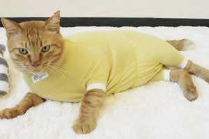 This Cat Clothing Design Aims to Help Neutered Pets Heal Well