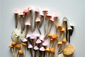 This Delicately Crafted Candy Resembles Field Fungus
