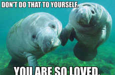 This Web Page is Solely Dedicated to the Calming Powers of Manatees