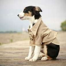 40 Couture Pet Outfits - From Matching Feline Couture to Dapper Pooch Attire