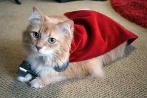 This Superhero Cat Costume is Adorably Inspired by Marvel's Thor