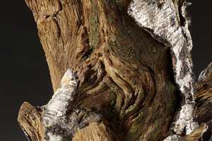 The 'Trompe L'oeil' Teapots Simulate Living Trees Using Ceramic