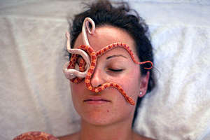 Live Snakes to Relieve Tension