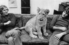 Viral Nature Videos - Christian the Lion