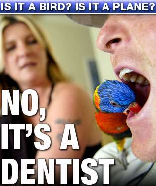 Pet Dentists - Rainbow is a Parrot That Fight Plaque