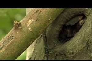 Greenpeace Gets Sensual With 'Forest Love'
