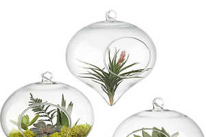 The Hanging Glass Terrarium from CB2 Brings Nature Indoors
