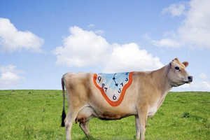 Body Paint Artist Emma Hack Covers Cows in Artwork