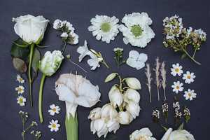 Emily Blincoe Uses Colorful Flowers to Organize Her New Series