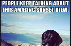 Unimpressed Dog Memes - Nothing Seems to Please This Negative Norman in These Hilarious Photos
