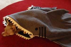 This Shark Blanket is the Perfect Dog Bed