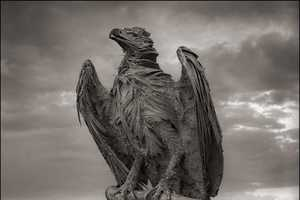 Nick Brandt's Portraits of Calcified Animals Look Like Charred Remains