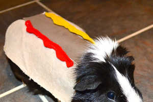 These Guinea Pig Costumes are Adorable Homemade Outfits