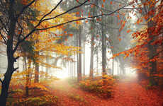 Majestic Forest Digital Photography