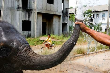 Setimental Urban Elephant Photography - Brent Lewin Captures Elephants in Unnatural Habitats