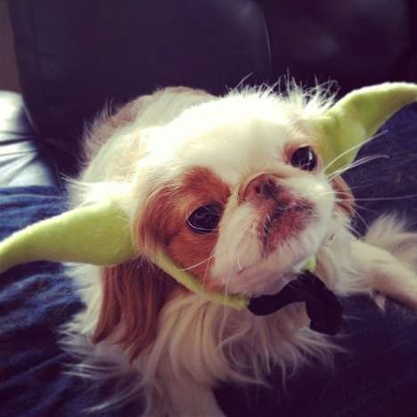From Dino Hamster Halloween Costumes to Jedi Pets