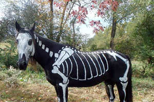 Sandy Cramer Painted a Skeleton Costume onto her Black Horse