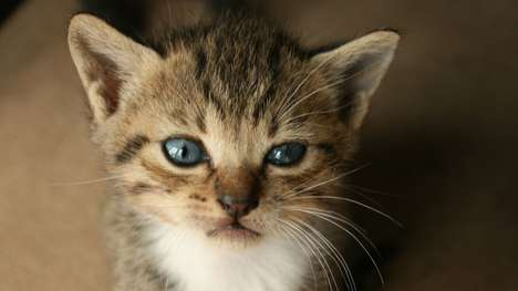 Kitten Delivery Services - Celebrate National Cat Day by Ordering a Kitten Through Uber