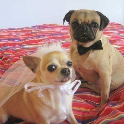 Canine Nuptial Costumes - Etsy's Pet Bride and Groom Costume is Adorably Festive