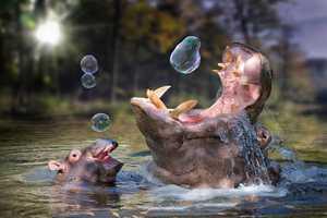 John Wilhem's Photography Puts Animals in Unbelievable Scenes