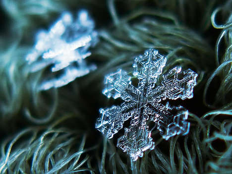 close up snowflakes