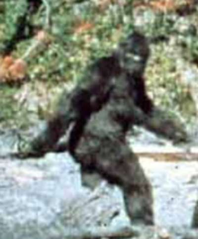 Bigfoot Parodies