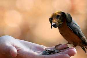 These Animal Hybrids Mix the Cuteness of a Dog with the Size of a Bird