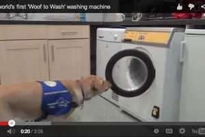The 'Woof to Wash' Lets Dogs Do Your Laundry for You