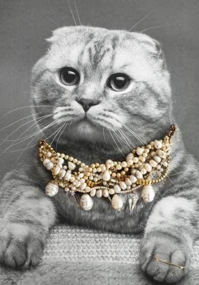 Regal Jewelry Catvertising - This Bejeweled Cat Jewelry Advertisement is Unexpected but Adorable