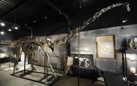 Prodigious Prehistoric Decor - The 60 Foot Diplodocus Skeleton is One Big Decoration