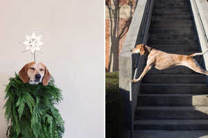 Photogapher Theron Humphrey Has Taken His Dog to Elevated Heights