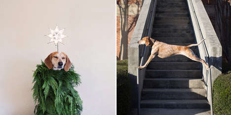 Perching Pet Photography - Photogapher Theron Humphrey Has Taken His Dog to Elevated Heights