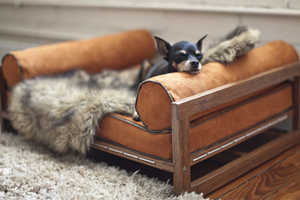 Architect Pets Creates Luxurious Furniture for Cats and Dogs