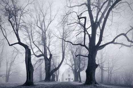 Monochromatic Foggy Forest Photography - Kilian Schönberger Captures Fog Covered Forests