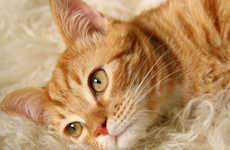 Allergy-Friendly Felines